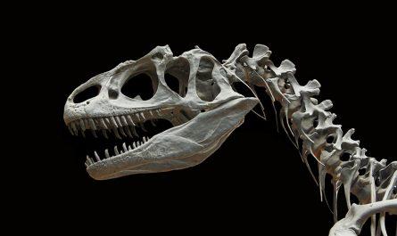 Huevo de dinosaurio más grande se descubre en la Antártida