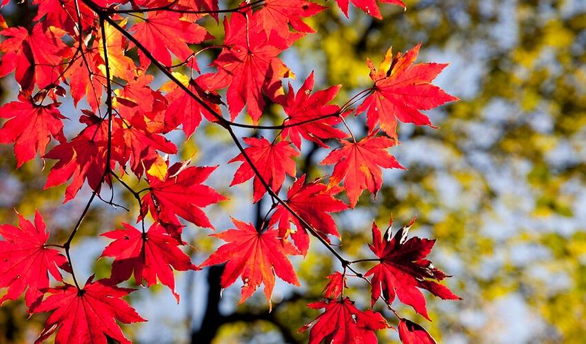¿Por qué las hojas se vuelven naranja en otoño?