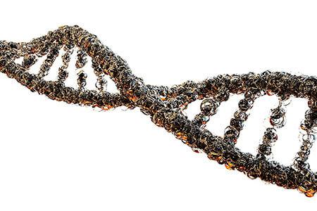 ¿Cuáles son las principales ramas de la biología?