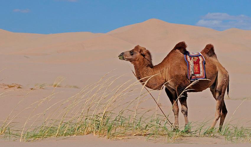 ¿Cuáles son los animales que viven en el desierto?