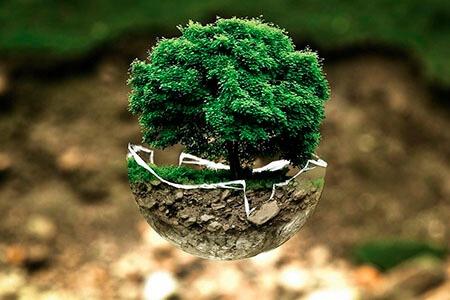 ¿Qué es la ecología y para qué sirve?