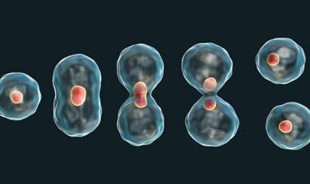 ¿Qué es la mitosis y la meiosis? ¿Cuáles son sus fases?