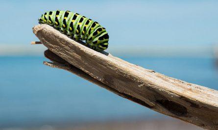 ¿Qué es y que estudia la zoología?